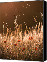 Eavning Canvas Prints - Glowing highlights Canvas Print by Rikard  Olsson