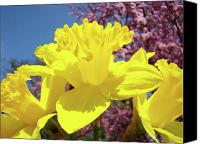 Tree Blossoms Canvas Prints - Glowing Yellow Daffodils Art Prints Pink Blossoms Spring Baslee Troutman Canvas Print by Baslee Troutman Fine Art Collections