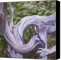 Irene Corey Canvas Prints - Gnarly Pine Canvas Print by Irene Corey