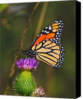 Insects Photo Canvas Prints - Gods Creation-16 Canvas Print by Robert Pearson