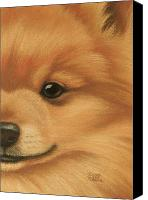 Pet Portrait Pastels Canvas Prints - Goggie Pomeranian Canvas Print by Karen Coombes