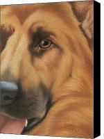 Pet Portrait Pastels Canvas Prints - Goggie Shepherd Canvas Print by Karen Coombes