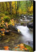 Autumn Leaves Canvas Prints - Golden Grove Canvas Print by Mike  Dawson