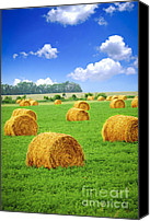 Hay Canvas Prints - Golden hay bales in green field Canvas Print by Elena Elisseeva