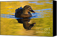 Waterfowl Canvas Prints - Golden Hen Canvas Print by Mike  Dawson