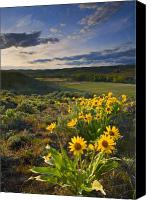 Valley Canvas Prints - Golden Hills Canvas Print by Mike  Dawson