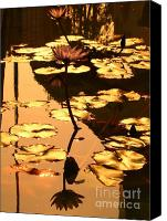 Lotus Leaves Canvas Prints - Golden Lotus Pond Canvas Print by Yali Shi