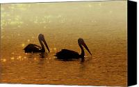 Pelican Canvas Prints - Golden Morning Canvas Print by Mike  Dawson