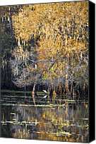 Florida Nature Photography Canvas Prints - Golden On The River Canvas Print by Carolyn Marshall