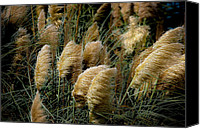Digiart Canvas Prints - Golden Pampas in the Wind Canvas Print by DigiArt Diaries by Vicky Browning