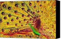 Bird Art Canvas Prints - Golden Peacock Canvas Print by David Lee Thompson