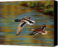 Waterfowl Canvas Prints - Golden Pond Canvas Print by Crista Forest