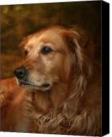 Dog Photo Canvas Prints - Golden Retriever Canvas Print by Jan Piller