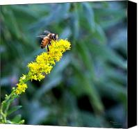 Signed Digital Art Canvas Prints - Golden Rod and Honey Bee Canvas Print by Suzanne  McClain
