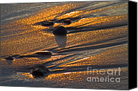 Pebbles Photo Canvas Prints - Golden sand  Canvas Print by Heiko Koehrer-Wagner