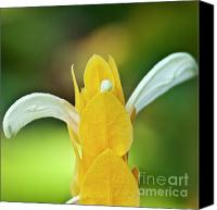Inspirational Photograph Canvas Prints - Golden Shrimp Plant Canvas Print by Heiko Koehrer-Wagner