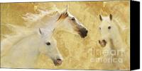 Horses Photographs Canvas Prints - Golden Steeds Canvas Print by Melinda Hughes-Berland