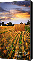 Straw Canvas Prints - Golden sunset over farm field in Ontario Canvas Print by Elena Elisseeva