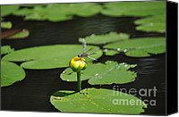 Lilly Pad Canvas Prints - Golden Throne Canvas Print by Luke Moore