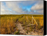 Race Point Canvas Prints - Golden Trail Canvas Print by Bill  Wakeley
