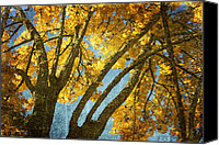 Big Tree Canvas Prints - Golden Tree Canvas Print by Bonnie Bruno