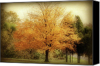 Indiana Autumn Canvas Prints - Golden Tree Canvas Print by Sandy Keeton