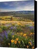 Wildflowers Canvas Prints - Golden Valley Canvas Print by Mike  Dawson