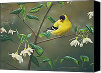 Finch Canvas Prints - Goldfinch and Snowbells Canvas Print by Peter Mathios