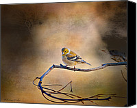 Walker Digital Art Canvas Prints - Goldfinch In Deep Thought Canvas Print by J Larry Walker