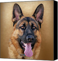 Alsatian Canvas Prints - Good Boy Canvas Print by Sandy Keeton