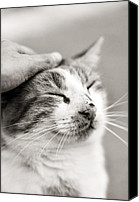 Caress Canvas Prints - Good kitty Canvas Print by Laura Melis