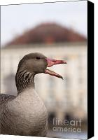 Conversing Photo Canvas Prints - Goose at Nymphenburg palace Canvas Print by Andrew  Michael