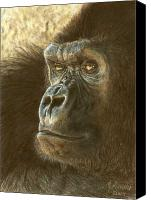 Animal Drawings Canvas Prints - Gorilla Canvas Print by Marlene Piccolin