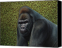 Hedge Canvas Prints - Gorilla with a Hedge Canvas Print by James W Johnson