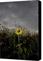 Sunflowers Canvas Prints - Goth Sunflower Canvas Print by Peter Tellone