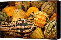 Matt Dobson Canvas Prints - Gourds Gourds Gourds Canvas Print by Matt Dobson
