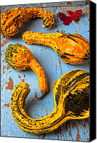 Leaf Pile Photo Canvas Prints - Gourds on wooden blue board Canvas Print by Garry Gay