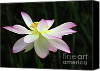 Botanical Beach Canvas Prints - Graceful Lotus Canvas Print by Sabrina L Ryan