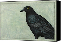 Crow Canvas Prints - Grackle Canvas Print by James W Johnson