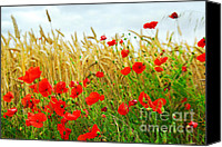 Wildflower Canvas Prints - Grain and poppy field Canvas Print by Elena Elisseeva