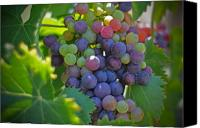 Canvas Greeting Cards Canvas Prints - Grapes Canvas Print by Kelly Wade