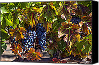 Napa Valley Canvas Prints - Grapes of the Napa Valley Canvas Print by Garry Gay