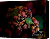 Patricia Schnepf Canvas Prints - Grapes Canvas Print by Patricia  Schnepf