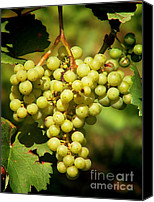 Snack Canvas Prints - Grapes - yummy And healty Canvas Print by Christine Till