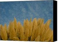 View Askew Canvas Prints - Grass And Sky Canvas Print by Katherine Adams
