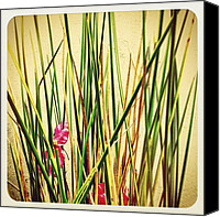 Nature Canvas Prints - Grasses Canvas Print by Julie Gebhardt