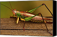 Grasshopper Canvas Prints - Grasshopper Canvas Print by Linda Tiepelman