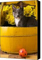 Stare Canvas Prints - Gray kitten in yellow bucket Canvas Print by Garry Gay