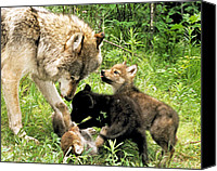 Wolf Cubs Canvas Prints - Gray Wolf with Cubs Canvas Print by Larry Allan