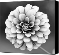 Flower Photo Canvas Prints - Graytones Flower Canvas Print by Photography PÃ¥